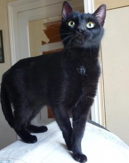 Mimine noire recad 1